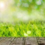 Při zazimování zahrady se soustřeďte na pár klíčových kroků