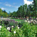 Podzimní výstava na Výstavišti Flora Olomouc 2020 aneb nenechte si ji ujít
